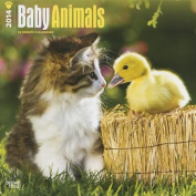 Baby Animals 2014 Wall Calendar