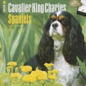 Cavalier King Charles Spaniels 2014 Wall Calendar