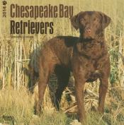 Chesapeake Bay Retrievers 2014 Wall Calendar