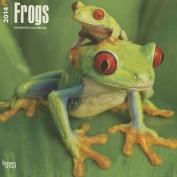 Frogs 2014 Wall Calendar