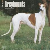 Greyhounds 2014 Wall Calendar