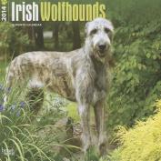 Irish Wolfhounds 2014 Wall Calendar