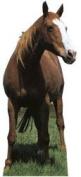 Horse (Mustang) Standing Cardboard Cutout