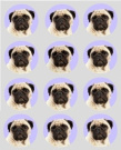 12 Pug dog design rice paper fairy / cup cake 40mm toppers pre cut decoration