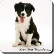 "Border Collie Puppy with ""Love You Grandma..."" Single Leather Coaster Mothers Day Gift"