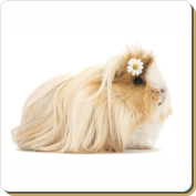 Flower Guinea Pig Leather Coaster Christmas Gift, Ref:GIN-5SC