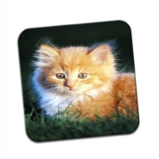 Fluffy Haired Kitten Sat in Green Grass Field Single Premium Glossy Wooden Coaster