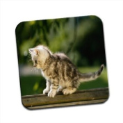 Fluffy Kitten Sitting on Top of Bench Single Premium Glossy Wooden Coaster