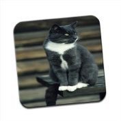 Grey & White Short Hair Cat On Park Bench Single Premium Glossy Wooden Coaster