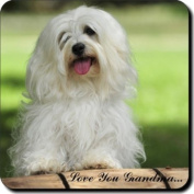 "Havanese Dog ""Love You Grandma..."" Grandparents Day Sentiment Single Leather Coaster Gift"