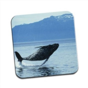 Humpback Whale Jumping Single Premium Glossy Wooden Coaster