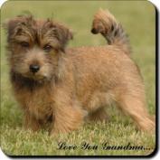 "Norfolk Terrier Dog ""Love You Grandma..."" Grandparents Day Sentiment Single Leather Coaster Gift"