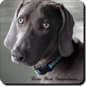 "Weimaraner Dog ""Love You Grandma..."" Grandparents Day Sentiment Single Leather Coaster Gift"