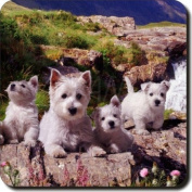 West Highland Terrier Dogs Leather Coaster Christmas Gift, Ref:AD-W4SC