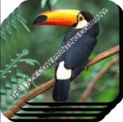 Toucan BIRD Glossy SET OF 4 WOODEN COASTER 48
