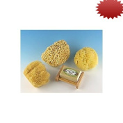 Natural Sea Sponge Sampler