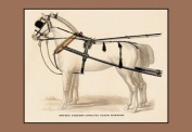 Buyenlarge 17187-1P2030 Double English Long-Tug Coach,Sport,Competition,Sports,Play,win,score Harness 20x30 poster