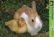 Mini Poster Adorable Bunny And Duck Best Friends Factual And Photography Poster For The Home And Classroom Full Colour 40x60cm