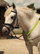 Harlequin Reflective Horses Martingale
