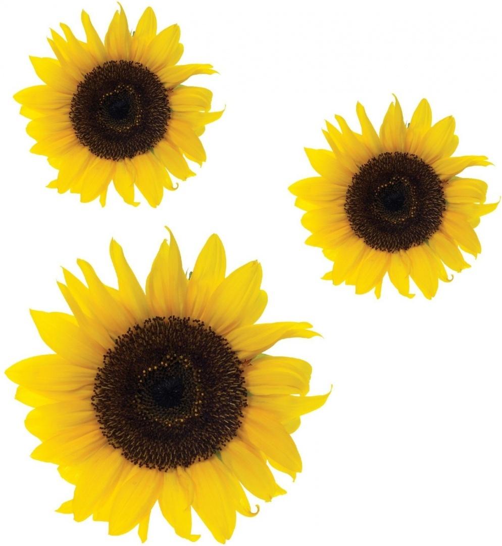 Sunflower flower Stickers,car, van, wall art, laptop Wheelie Bin ...