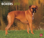 For the Love of Boxers 2012 Calendar