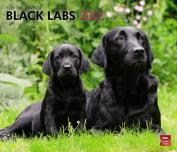 For the Love of Labrador Retrievers 2012 Calendar