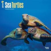 Sea Turtles Calendar