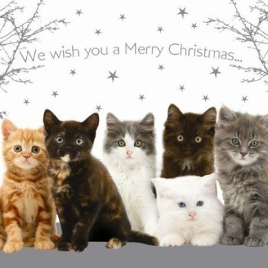merry christmas cats amp kittens christmas cards pack by