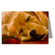 Redford the Golden Retriever and Jimmy Note card Set