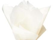 Birch Tissue Paper 100 Sheets 38cm X 50cm