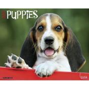 Puppies 2014 Wall Calendar