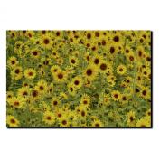 Trademark Fine Art A Sunflower Day by Kurt Shaffer Canvas Wall Art, 60cm x 80cm