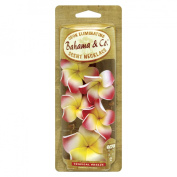 Bahama & Co. Odor Eliminating Tropical Breeze Scent Necklace Car Air Freshener