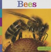 Bees (Seedlings)