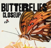 Butterflies CloseUp