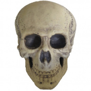 Foam Skull Halloween Prop