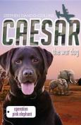 Caesar the War Dog 3