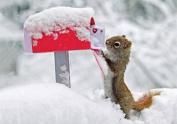Squirrel's Greetings