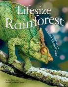 Lifesize: Rainforest