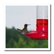 Rebecca Anne Grant Photography Birds - Hummingbird On Feeder 2 - Iron on Heat Transfers