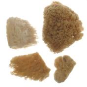 Royal & Langnickel Sea Silk Sponges pack of 4