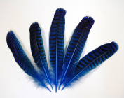 1 Pc Dyed Peacock Quill 18cm - 25cm Feathers - ROYAL BLUE