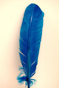 5 Pcs Turkey Quills Feathers 20cm - 30cm - TURQUOISE