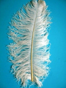 1 Pc Ostrich Feather Plume 46cm - 60cm (Top Quality) - IVORY