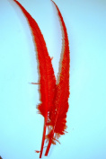 2 Pcs Ostrich NANDU Feathers 46cm - 60cm Plumes - ORANGE