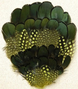 6 Pcs Dyed Guinea w/ Natural Black Pheasant Pads - GOLD Feathers