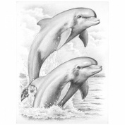 Sketching By Number Kit 20cm x 30cm -Dolphins