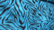 Turquoise Zebra with Black Stripes Printed Fleece on 150cm Fabric By the Yard