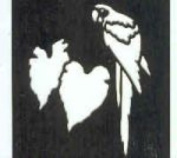 Ecstasy Crafts Square Stencil - Parrot