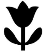 Medium Punch: Tulip